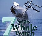 Whale watch attractions from 7 Seas Whale Watch in Gloucester